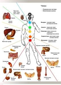 связь органов с энергетикой человека
